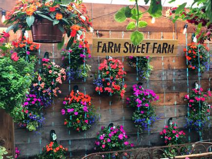 Impatien pouch photo wall, Wayne's Daughter's Farm & Greenhouse