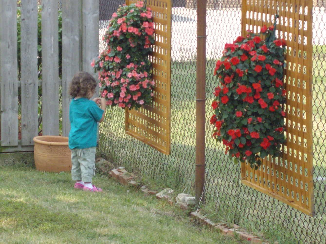 Investigating the impatiens in the backyard