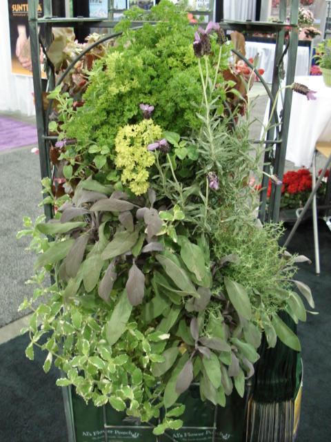 Mixed herbs vertical garden