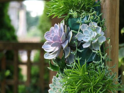 Stunning succulents