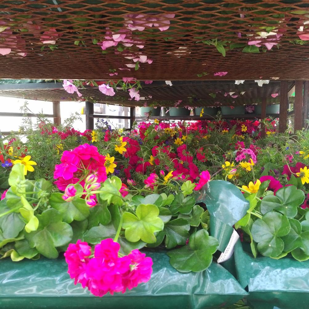 Shipping geranium pouches