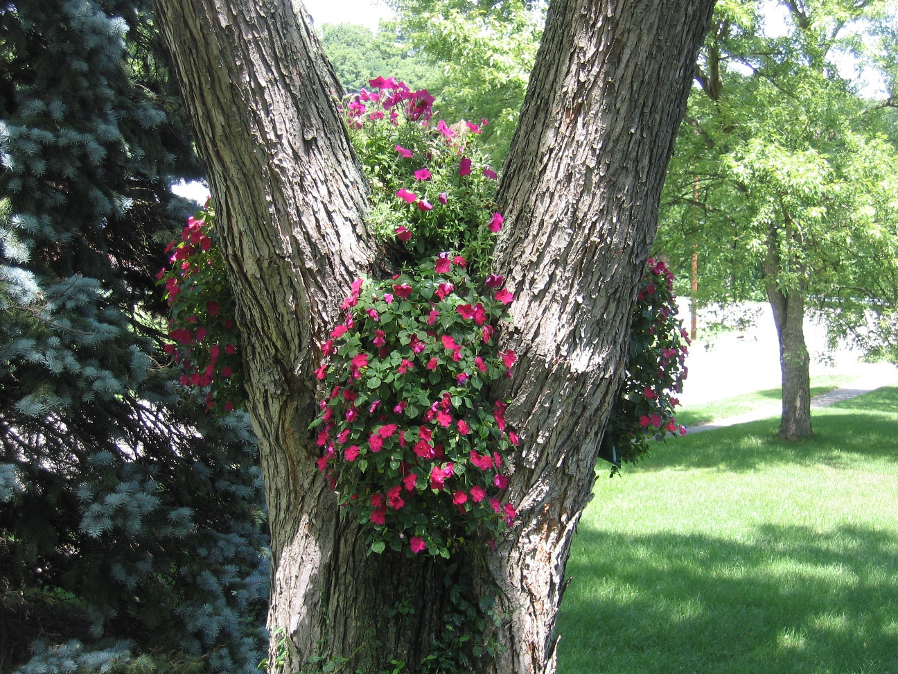 Impatiens decorate a tree at this backyard wedding
