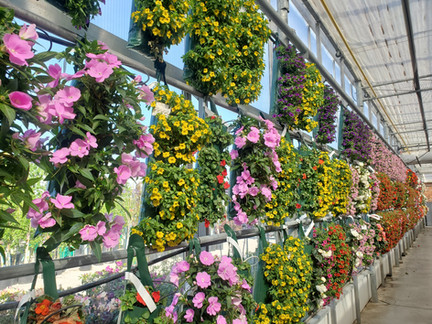 Saving space and creating a dramatic display @ Terra Greenhouses