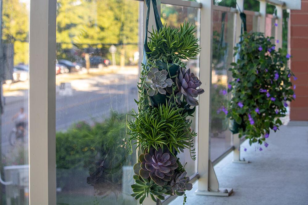 Low maintenance garden idea for condo balconies! Succulents and Streptocarpella