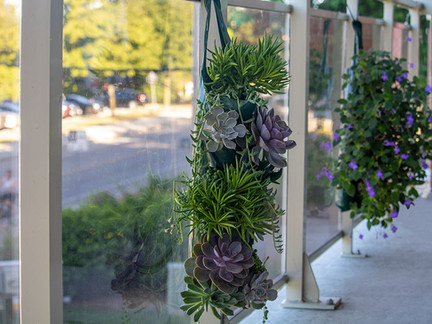 Low maintenance garden idea for condo balconies! Succulents and Streptocarpella