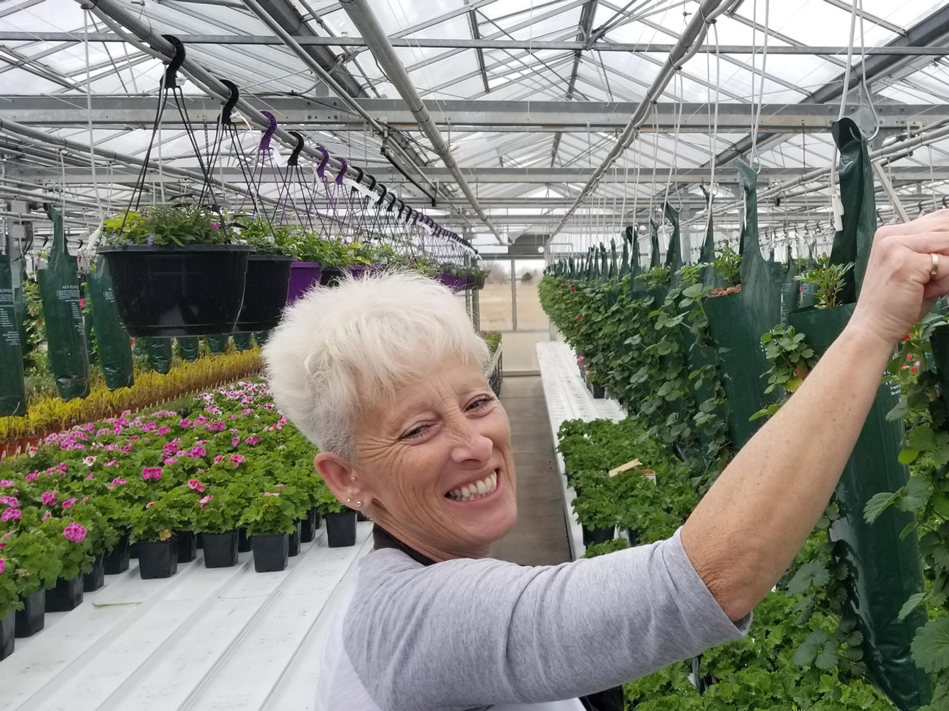 Strawberries, Thiel's Greenhouses