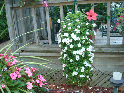Perky vinca pouches are perfect for patios