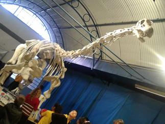 Mafra e os dinossauros (CENPALEO)