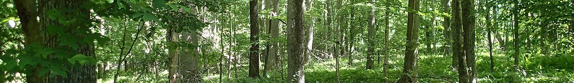 P6140924 Miller Farm forest.JPG