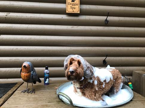 5EC25F47-luxury dog friendly cottages Quantock Hills