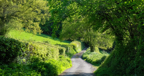 Narrow country lane.jpg