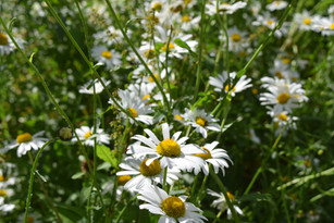 FLOWERS V CLOSE.JPG