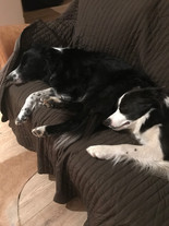 Rural country cottages dog friendly near to coast enclosed gardens all breeds