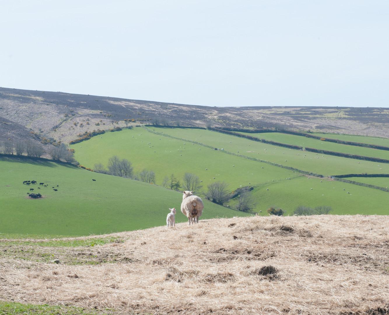 Dartmoor fields.jpg