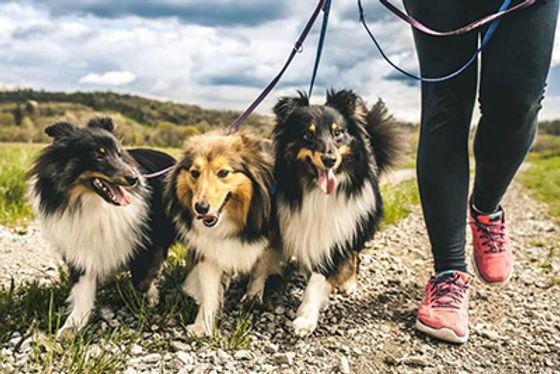 header_image_blog_next-level_dog_walker-