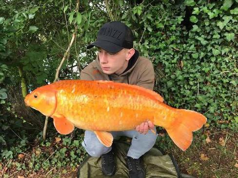 20108341_1496725047Follyfoot Fishery, Carp Fishery in North Petherton, Somerset058313_45287168685483