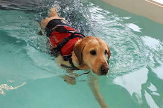 canine-hydrotherapy.jpg