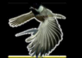 Chickadee - Mr.Vecchio