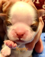 2.11Scotty.jpg