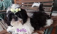 Bella2019 - Copy.jpg