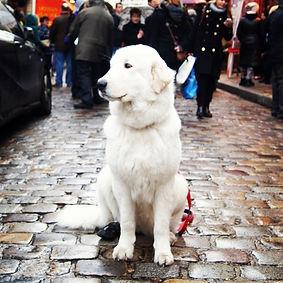 Заведения для собак, куда пойти с собакой, вход с собаками разрешен.