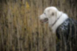 Официальные документы и законы о собаках