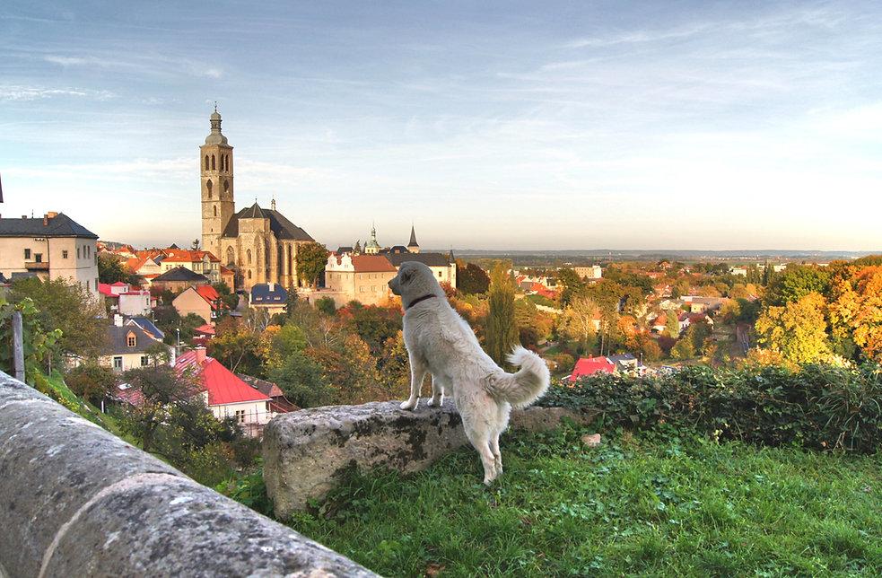Путешествие с собакой - маршруты, правила, места где остановиться с собакой.