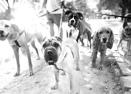 Dog%20Walker_edited.jpg