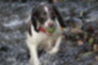 dog walking bramhall, dog walker in stockport
