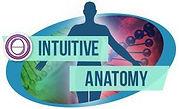 intuitive-anatomy.jpg