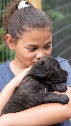 Cane Corso Puppy Royal Guardian_edited.jpg