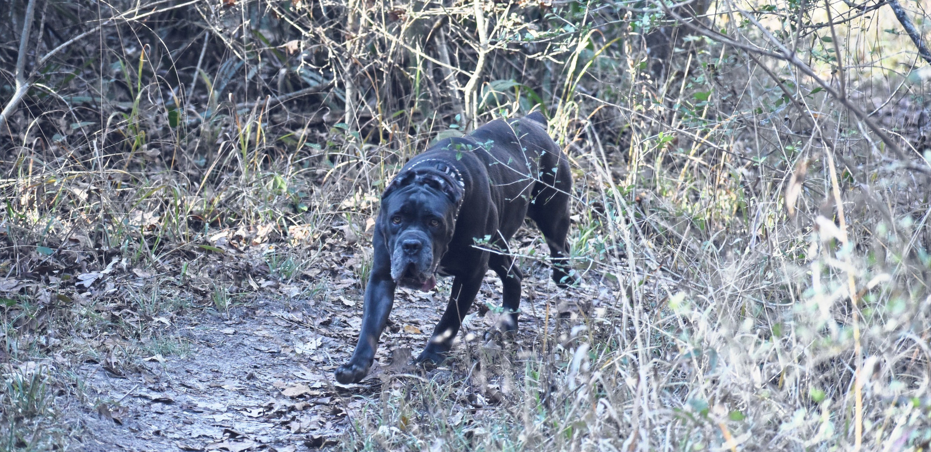 True Trail Dog