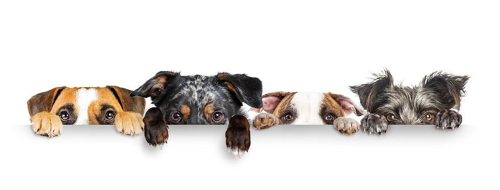 Bethy's Dogs 3.jpeg