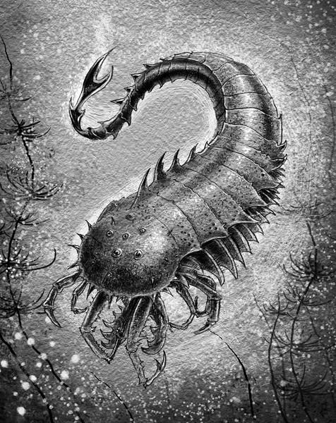Spikey Sea Critter