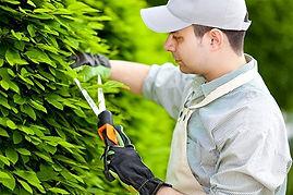jardineiro-900x600.jpg