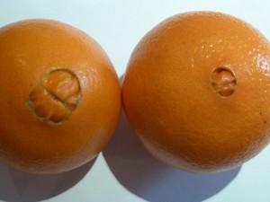 Les Oranges ''Novelline''