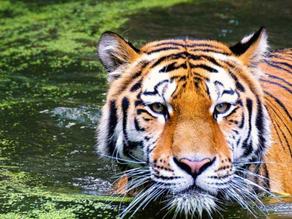 Visit Jim Corbett National Park - Uttarakhand   Luxury Travel & Vacations With Sàwai