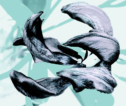 Turf Dolphins