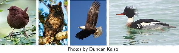 Birds Photos .png