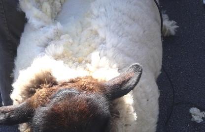 Gardening & Sheep Shearing.jpg