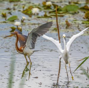 Waterbird Ballet