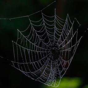 Spiderweb dew covered