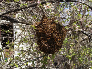 Swarm!!