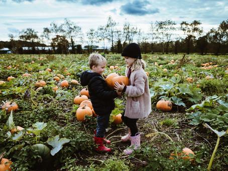 Pom Pumpkins stories