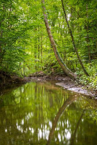 Vaux Cernay Foret Rivière - 002 - 07 jui