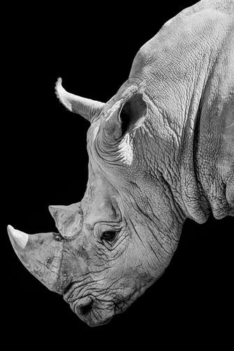 Rhino NB  - 08 août 2016 (Copier).jpg