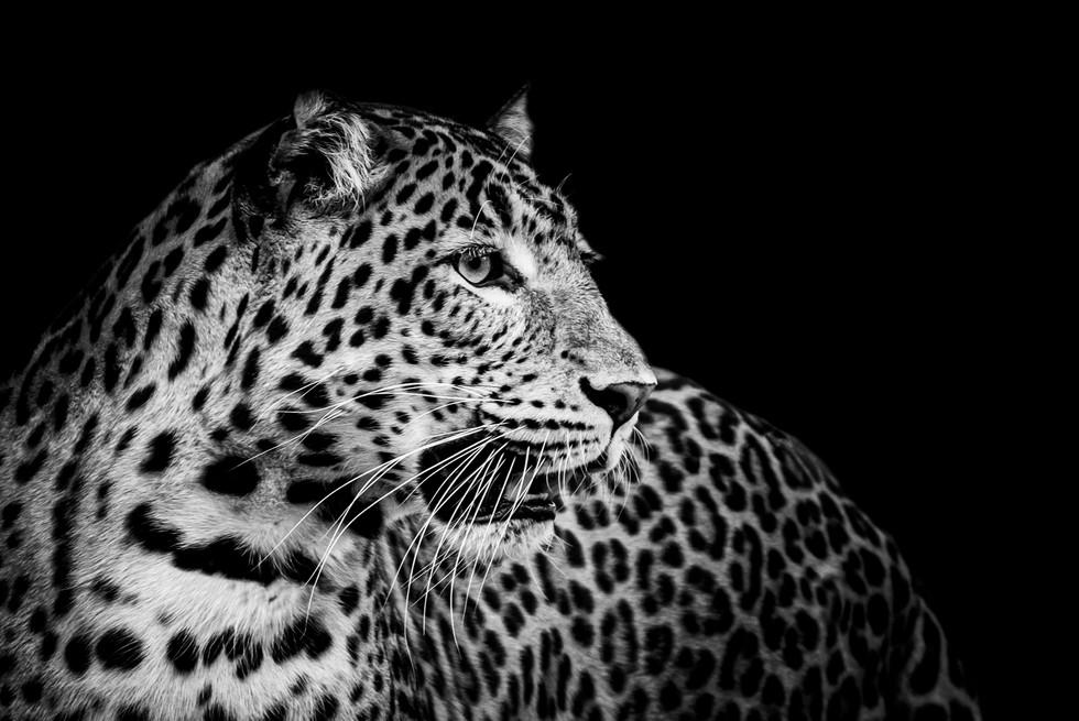 Leopard v4 - 002 - 21 septembre 2019 (Co