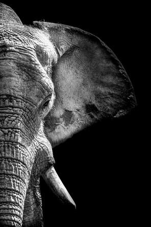 Elephant NB  - 08 août 2016 (Copier).jpg