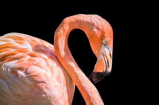 flamingo v2 - 001 - 02 décembre 2018-2 (