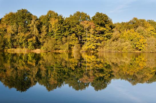 Foret-16 octobre 2011-001 (Copier).jpg